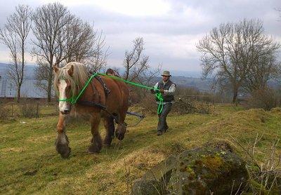 Foto zur Meldung: Einsatz eines Arbeitspferdes im Vogelsberggarten