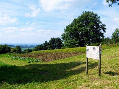 Foto zur Meldung: Einladung in den Vogelsberggarten zum Flachsrupfen