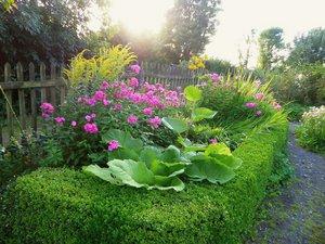 Foto zur Meldung: Ein Jahr im Vogelsberggarten: Arnika, Trollblume, Eisenhut & Co