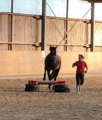 Foto zur Meldung: Horse Agility mit Karla Pappstein