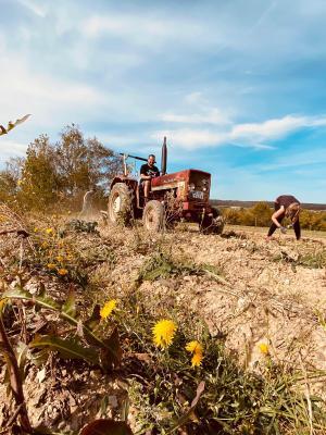 Vorschaubild zur Meldung: Dichtelbacher Dorftreff feiert Kartoffelernte