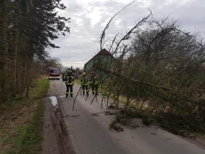 Bild der Meldung: Einsatz # 03/2020 - Technische Hilfe - Eckholm, Baum auf Str.