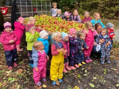 Apfelernte für Apfelsaft des Kindergartens