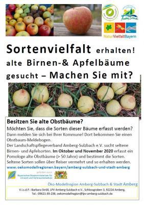Foto zur Meldung: Alte Birnen- und Apfelbäume in den Gemeinden Hirschbach und Königstein gesucht