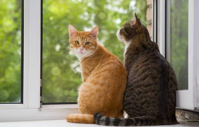 Vorschaubild zur Meldung: An alle Katzenhalter