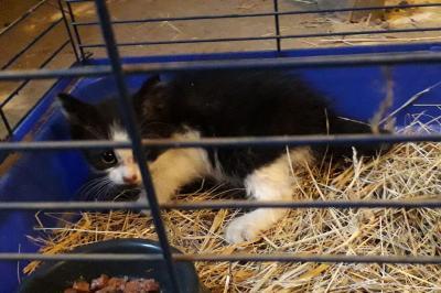 Vorschaubild zur Meldung: Katze in Zinnitz zugelaufen / Besitzer gesucht