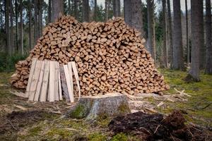 Foto zu Meldung: Holzerntemaßnahmen in der Gemeinde Rehfelde
