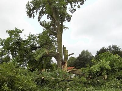 Vorschaubild zur Meldung: Naturdenkmal in der Kleingartenanlage ist zerbrochen