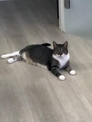 Foto zur Meldung: Katze Leni