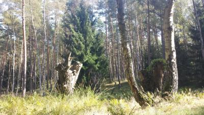 Foto zur Meldung: Brandenburg: Online-Plattform für Privatwaldbesitzer