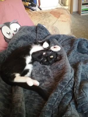 Foto zur Meldung: Katze Lilli Lilli scheint sich sehr wohl in ihrem neuen Zuhause zu fühlen