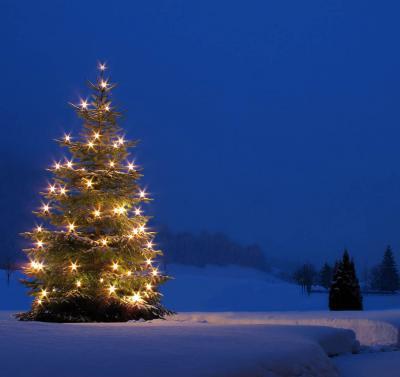 """Vorschaubild zur Meldung: Spendenaufruf """"Weihnachtsbaum"""" für das Rathaus"""