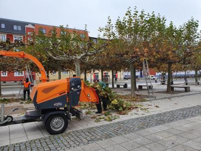 Mitarbeiter des Betriebshofes beim Baumschnitt vor dem Kultur- und Festspielhaus I Foto: Franziska Lenz