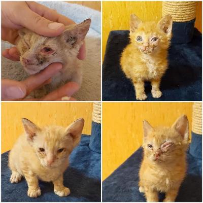 Vorschaubild zur Meldung: Beschlagnahmung von 28 Katzen!!