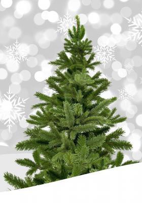 Foto zur Meldung: Vereinsgemeinschaft Bleichenbach verkauft Weihnachtsbäume