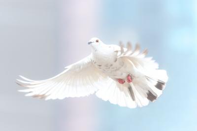 Bild der Meldung: Aufforderung zur Bewerbung für die Ämter des Friedensrichters und des stellvertretenden Friedensrichters für die Schneeberger Schiedsstelle
