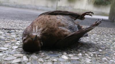 """Vorschaubild zur Meldung: """"Vogelgrippe"""" auch in Brandenburg festgestellt - Kreisveterinäramt ruft Geflügelhalter zu besonderer Vorsicht auf"""