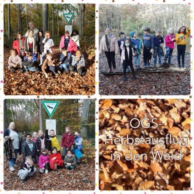 Herbstausflug in den Wald