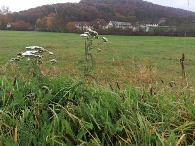 Bild der Meldung: Phytotherapie in der Nutztierhaltung, Sa., 28.11.2020 -jetzt anmelden!-