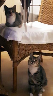 Foto zur Meldung: Mara und Miri