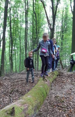 Bild der Meldung: Waldgeister, Pilze und mehr