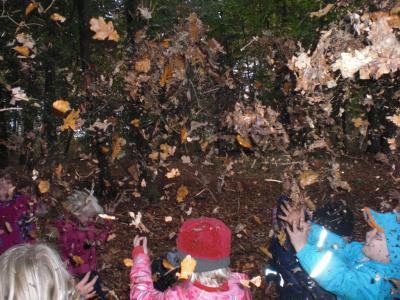 Vorschaubild zur Meldung: Waldprojekt im Biberbau - Herbst 2020