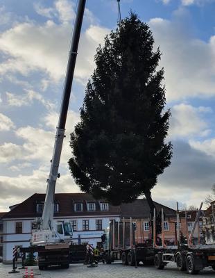 Foto zur Meldung: Beeskower Weihnachtsbaum aufgestellt