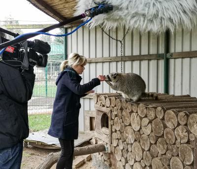 Keine Berührungsängste: Joanna Jambor verwöhnt den zahmen Waschbär Richi. Foto: Beate Vogel