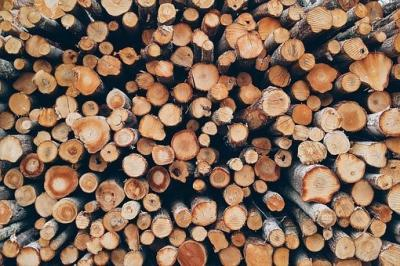 Brennholzverkauf im Stadtwald Florstadt