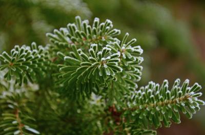 Foto zur Meldung: Weihnachtsbaum für Alle