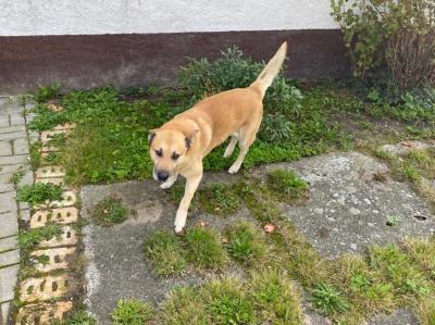 Vorschaubild zur Meldung: Hund vermutlich in Luckaitztal entlaufen !