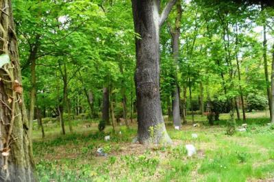 Foto zur Meldung: Friedhofsverwaltung informiert zum Friedhofsforst