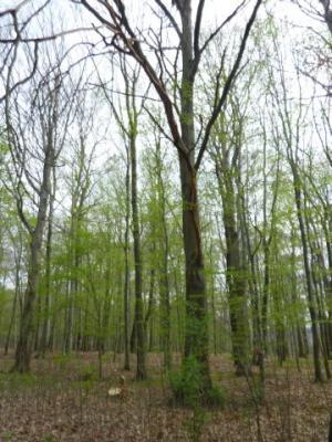 Baum im Park Hirschstein