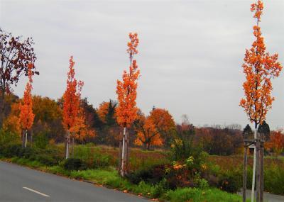 Foto zur Meldung: Baum des Monats – Die Eiche