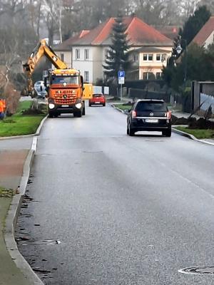 Foto zu Meldung: Neue Linden in der Belziger Straße