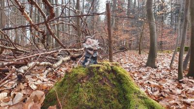 Bilder aus dem Nechtelser Holz