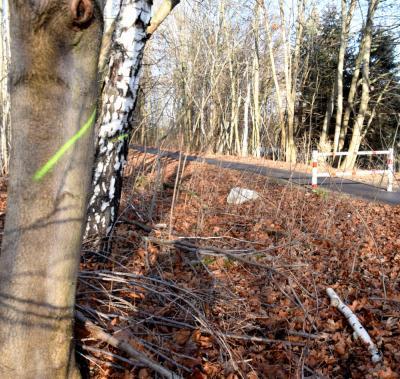 Vorsicht: Gemeinde startet ab Januar mit Holzungsarbeiten an der Karl-Marx-Straße in Klettwitz