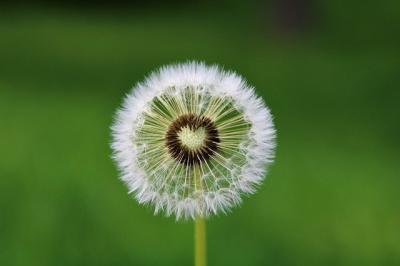 Bild der Meldung: Atemräume - eine Kontakt-Atemübung