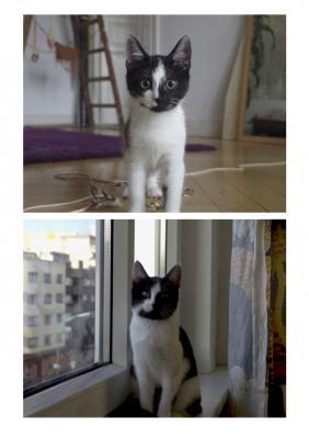 Foto zur Meldung: Katze Peggy