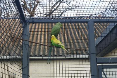 Foto zur Meldung: Papagei Willi