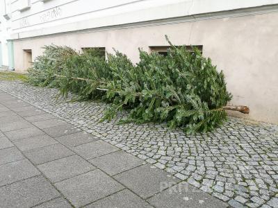 Abgeschmückte Weihnachtsbäume sollten nicht irgendwo, sondern an den Containerstellplätzen abgelegt werden, wo sie die Mitarbeiter der Stadt einsammeln. Foto: Andreas König