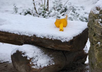 Schaufel im Schnee