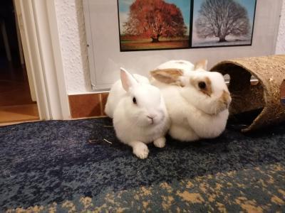 Foto zur Meldung: Kaninchen Flocke