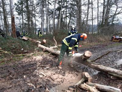 Unterstützung Rettungsdienst, Person unter Baum eingeklemmt