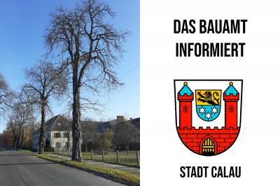 Foto zur Meldung: In der J.-Gottschalk-Straße werden Bäume gefällt