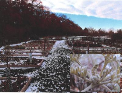 Foto zur Meldung: Ein Jahr im Kräutergarten an der Berzallee - Heilkräuter des Monats