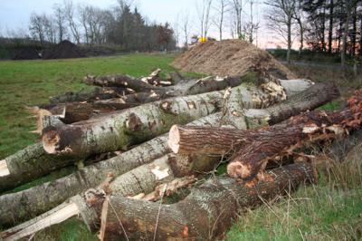 Für die Errichtung der Strommasten mussten diverse Hölzer gefällt werden.