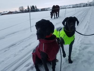 Foto zur Meldung: Lucy und Hanna können nun ihr Hundeleben richtig genießen
