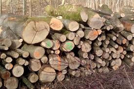 Zuteilung von Brennholz an die Nachbarberechtigten