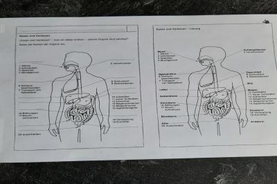 Foto zur Meldung: Klasse 3AA: Der menschliche Körper